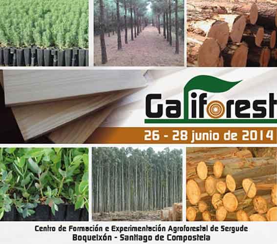 Formación Galiforest